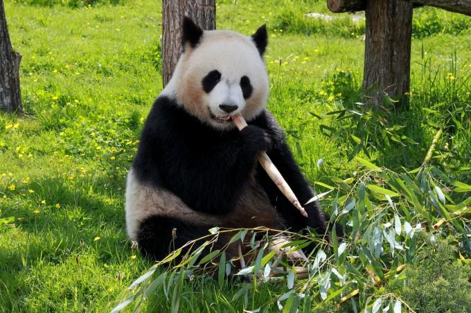 Google запускает обновление алгоритма Panda